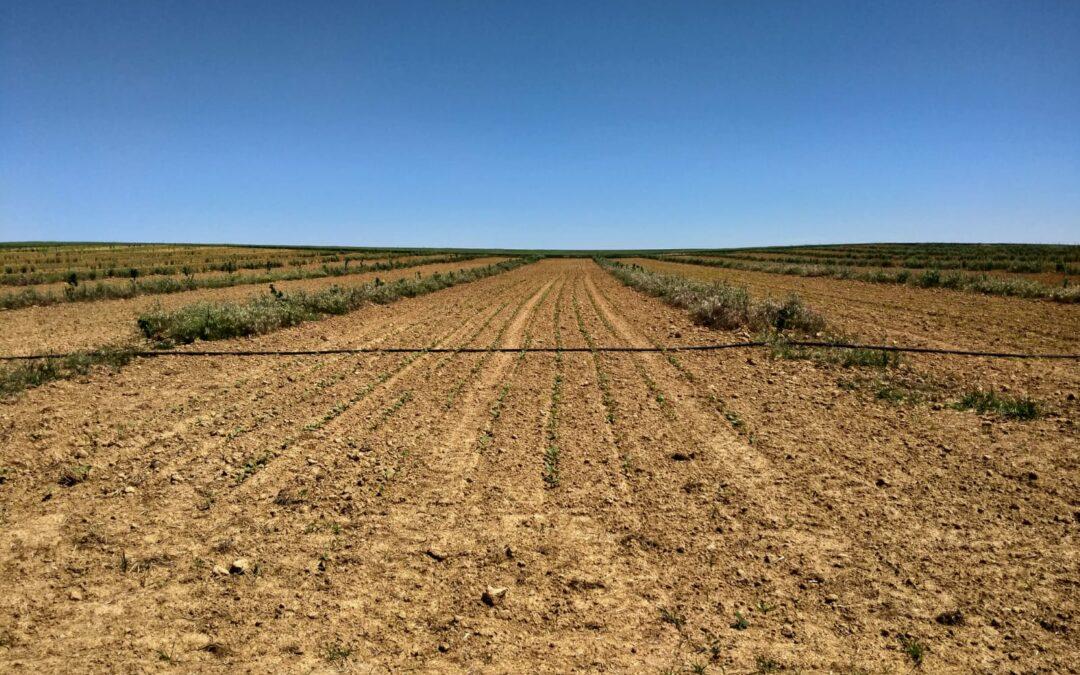 Agrosilvicultura y biodiversidad